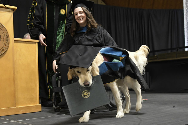 Dog Receives Honorary Diploma! But why?
