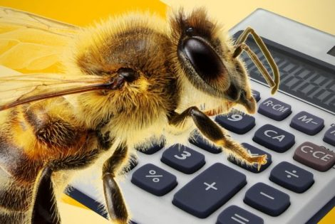 Bees Have The Ability To Do Maths!