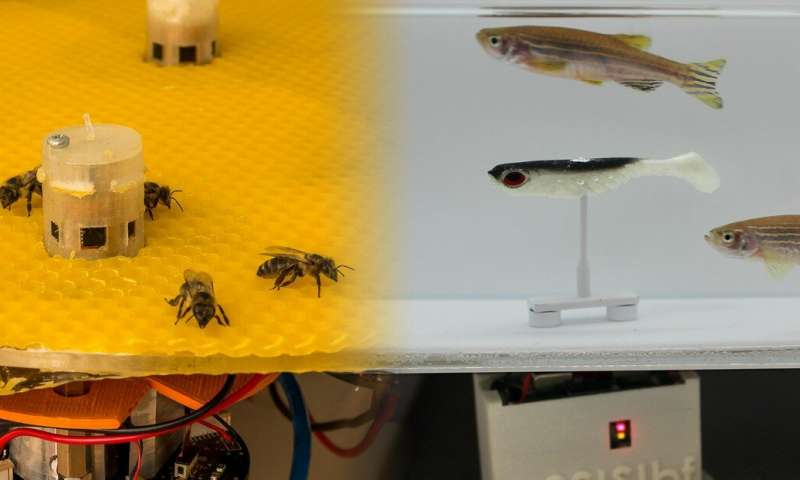 Bees & Fish Can Talk To Each Other!